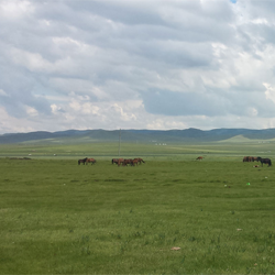 LCLUC Synthesis: Ecosystem-Society Interactions on a Changing Mongolian Plateau